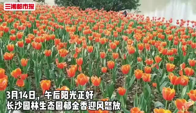 """""""花仙子""""在等你!长沙""""赏春地图""""来啦"""